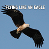 Flying Like An Eagle - Positive Thinking Doctor - David J. Abbott M.D.