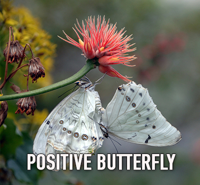 Butterflies don't get depressed - Positive Thinking Doctor - David J. Abbott M.D.